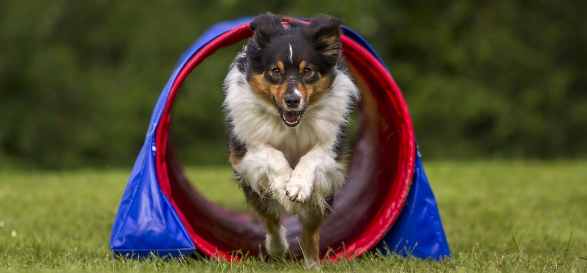 How to keep your dog active by Perfect Fit