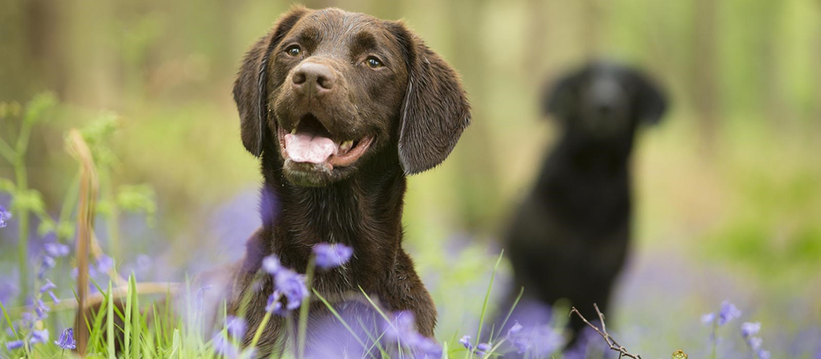 Perfect Fit tips to identify the possible breeds in your dog's background